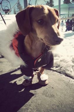 December 26th, 2011- Mandu's first time in snow