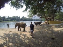Elephants World